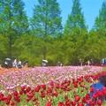Photos: GW最後の土曜日@初夏の世羅高原農場