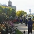 写真: 五月のばら公園の散歩道@福山ばら祭2018(準備中)