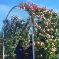 Photos: 薔薇のアーチの散歩道@ばら公園@福山ばら祭2018(準備中)