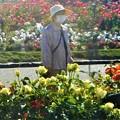 五月の薔薇とマスクの散歩美女@福山・ばら公園
