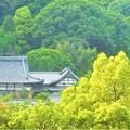 写真: 長光寺の新緑@備後路