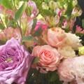 Photos: ばら・薔薇・バラ・ROSE・・・@福山ローズアリーナ
