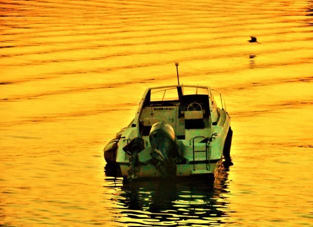 夕暮れの海とアオサギ@新浜港沖合