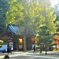Photos: 山門のイヌマキと紅葉@佛通寺