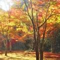 佛通寺の燃える秋