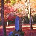 Photos: 錦秋の紅い絨毯(ジュウタン)@備後路・佛通寺