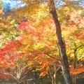 Photos: 錦秋の佛通寺