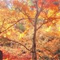 Photos: 紅葉に包まれて@晩秋の仏さま