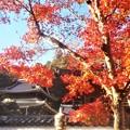 写真: 佛通寺の紅葉@法堂(はっとう)・鐘楼周辺