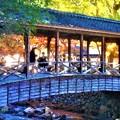 Photos: せせらぎと紅葉@佛通寺・ 巨蟒橋(きょもうきょう)
