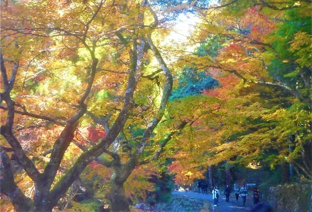 深山幽谷の紅葉の名所を歩く@大本山佛通寺