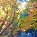 写真: 深山幽谷の紅葉の名所を歩く@大本山佛通寺