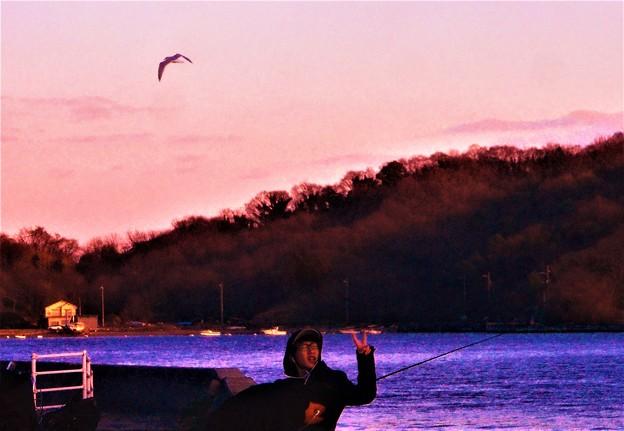 早春の海にカモメ飛ぶ@日曜日の瀬戸内海