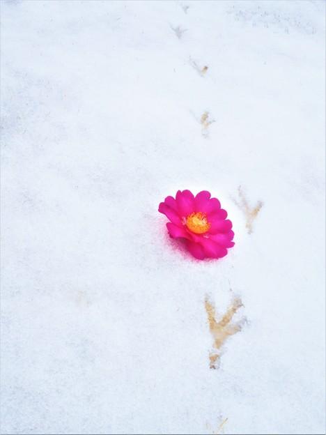 瀬戸内の雪の朝@建国記念の日