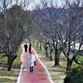 Photos: 桜はまだかいな~
