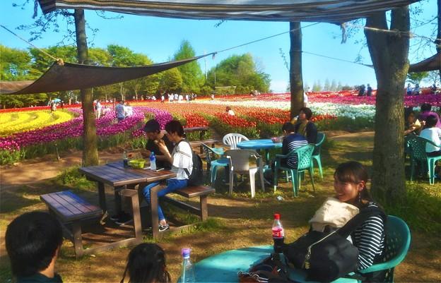 五月のチューリップ祭2019@世羅高原農場