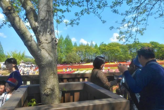 展望デッキ(フォレストデッキ)からの眺め@チューリップ祭