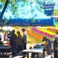チューリップ祭と売店風景@世羅高原