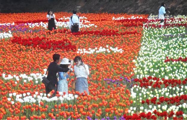 GWの世羅高原の花絵@チューリップ祭2019