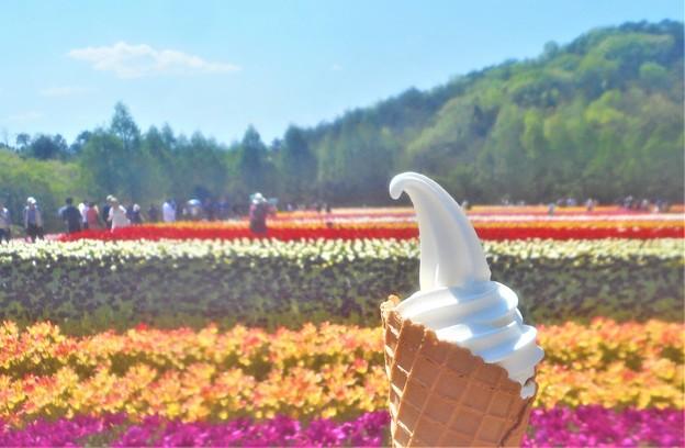 花よりアイス@初夏の世羅高原