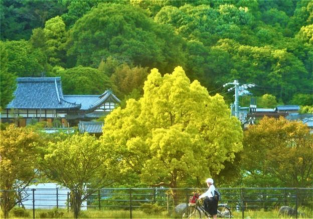 新緑に包まれた初夏の長光寺