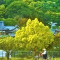 Photos: 新緑に包まれた初夏の長光寺