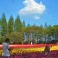 Photos: 新緑の チューリップ畑@世羅高原農場
