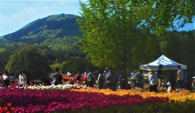 五月の世羅高原@チューリップ祭2019