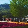 Photos: 五月の世羅高原@チューリップ祭2019