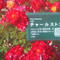 """Photos: 初夏の紅い薔薇 """"チャールストン""""@中央公園@詳細はQRコードから"""