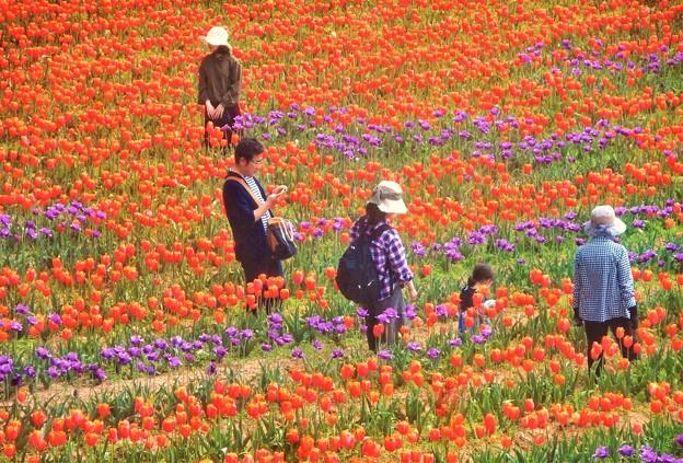 花絵の中を散歩@世羅高原農場@展望デッキ