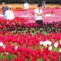 Photos: 花絵の中を散歩する@世羅高原