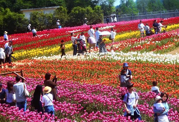 Photos: 行楽日和の世羅高原農場@チューリップ祭2019
