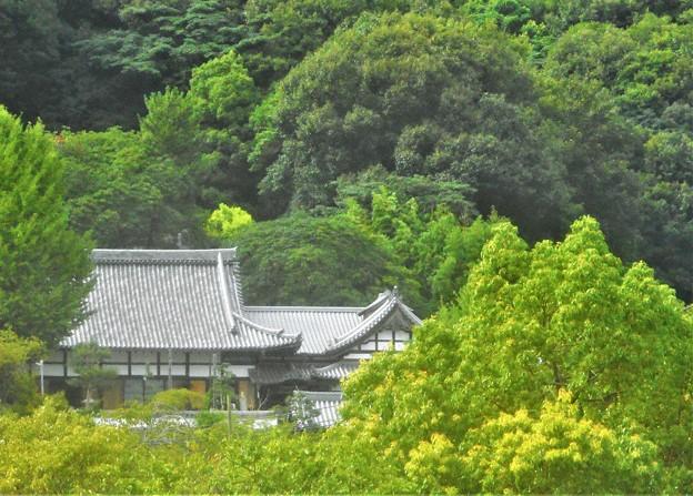 夏の東光寺遠景