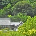 Photos: 夏の東光寺遠景