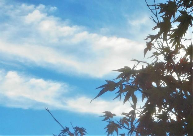 九月の秋の空@びんご運動公園