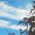 Photos: 九月の秋の空@びんご運動公園