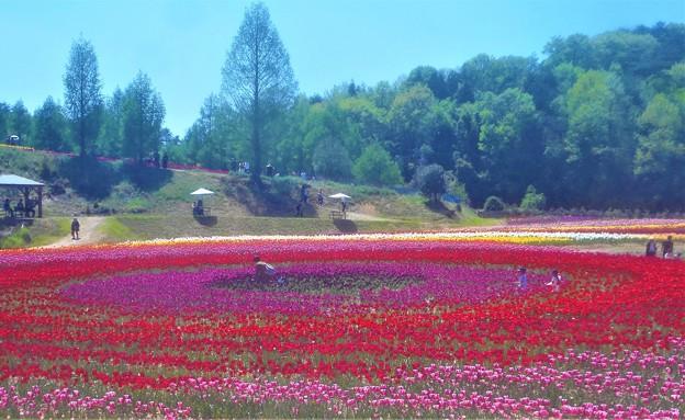 新緑のチューリップ祭2019@世羅高原