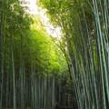 Photos: 京都 初秋 4