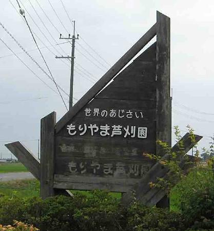 もりやま芦刈園(アジサイ園)-200620-2