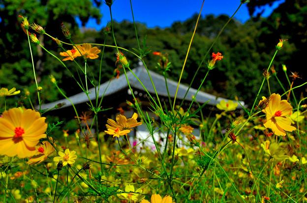 Photos: 秋風薫る大和の寺