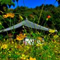 秋風薫る大和の寺