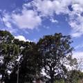 空がほんま青いよ