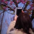 写真: 娘と河津桜