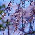 Photos: 日本の心