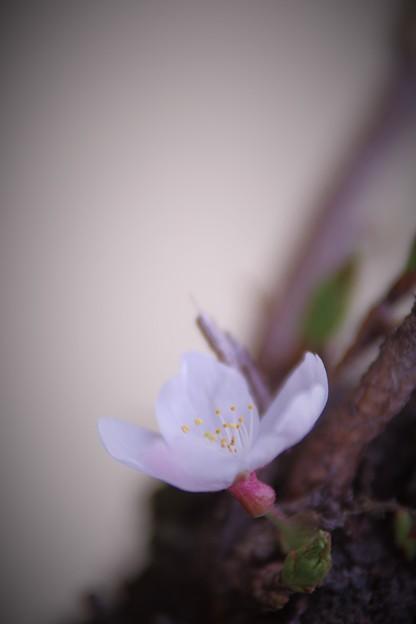 Photos: ヒコバエ