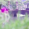 菖蒲から眺める