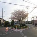 桜のロータリー