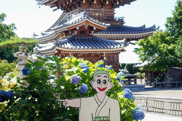 紫陽花寺にて7(あっち~)