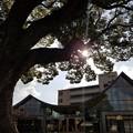 写真: 大きな木